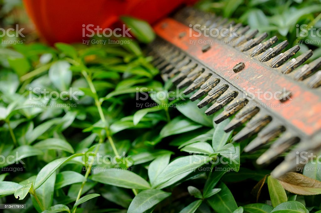 Hedge Clippers stock photo