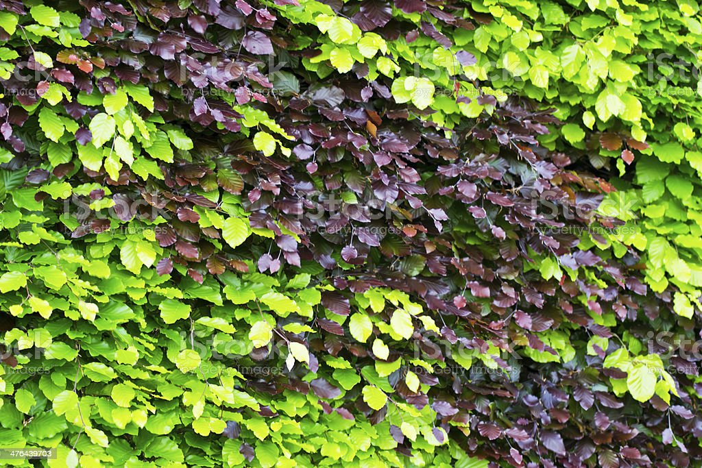 Hedge green brown stock photo