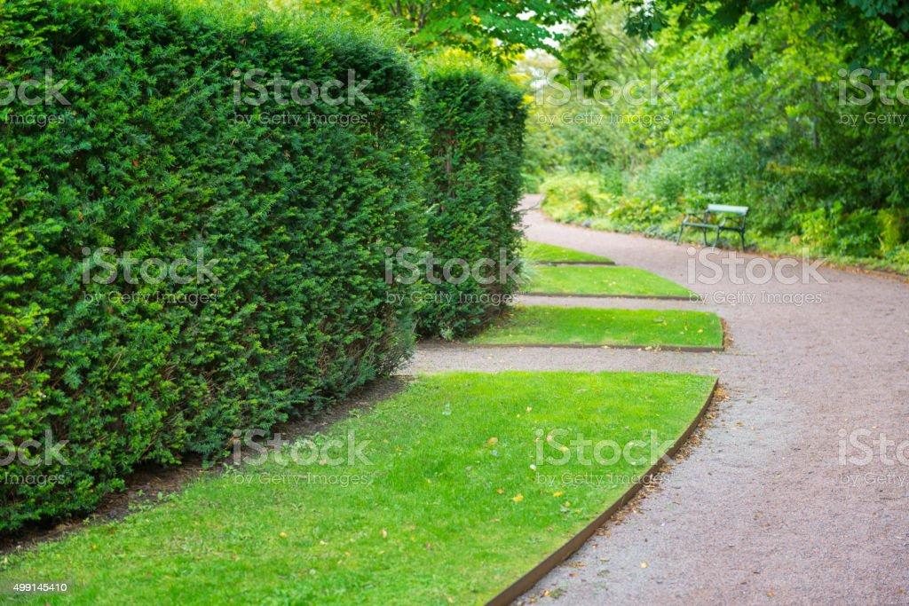 Hedge in British garden stock photo