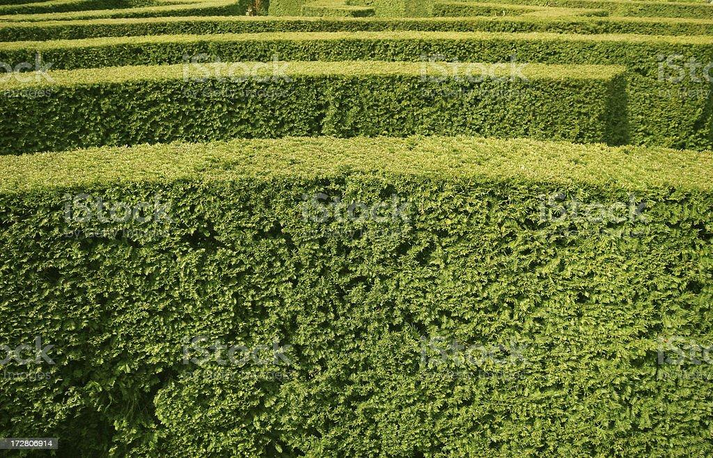 Hedge Maze royalty-free stock photo
