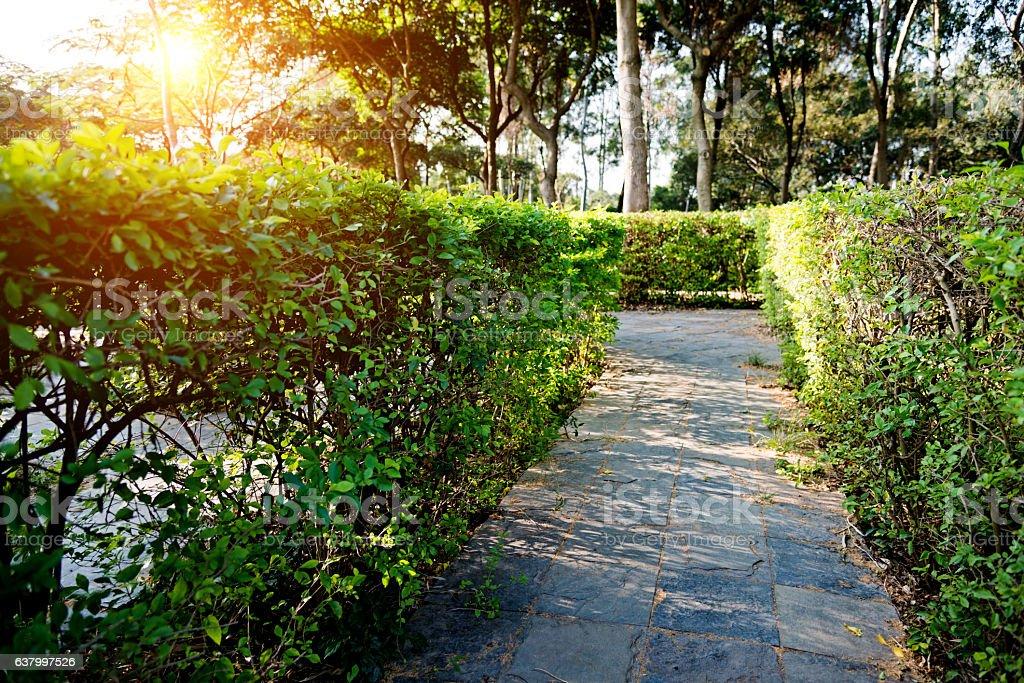 Hedge maze stock photo