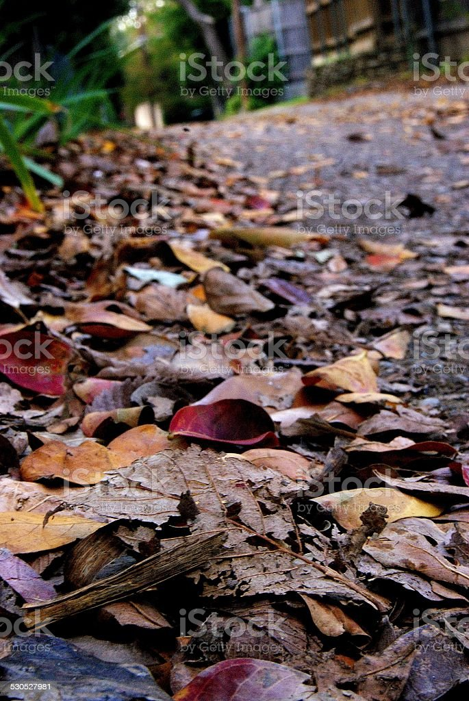 Hedge of Color royalty-free stock photo