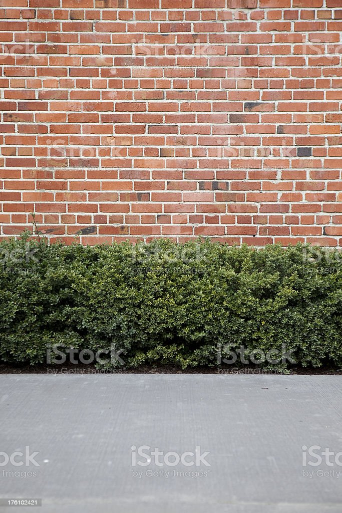 Hedge, sidewalk and brick wall building siding as background, backdrop royalty-free stock photo