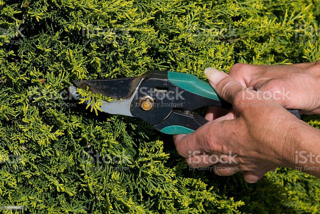 Recorte de Hedge foto royalty-free