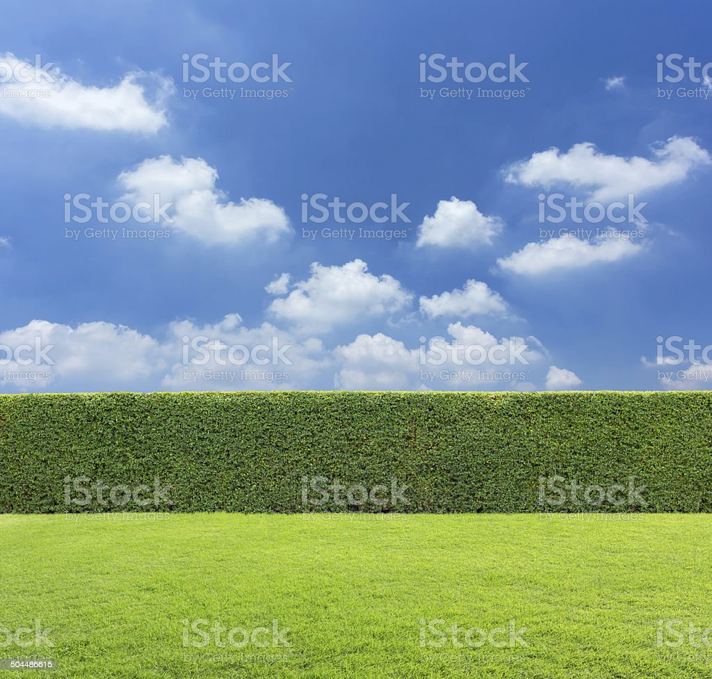 hedge with sky and grass stock photo