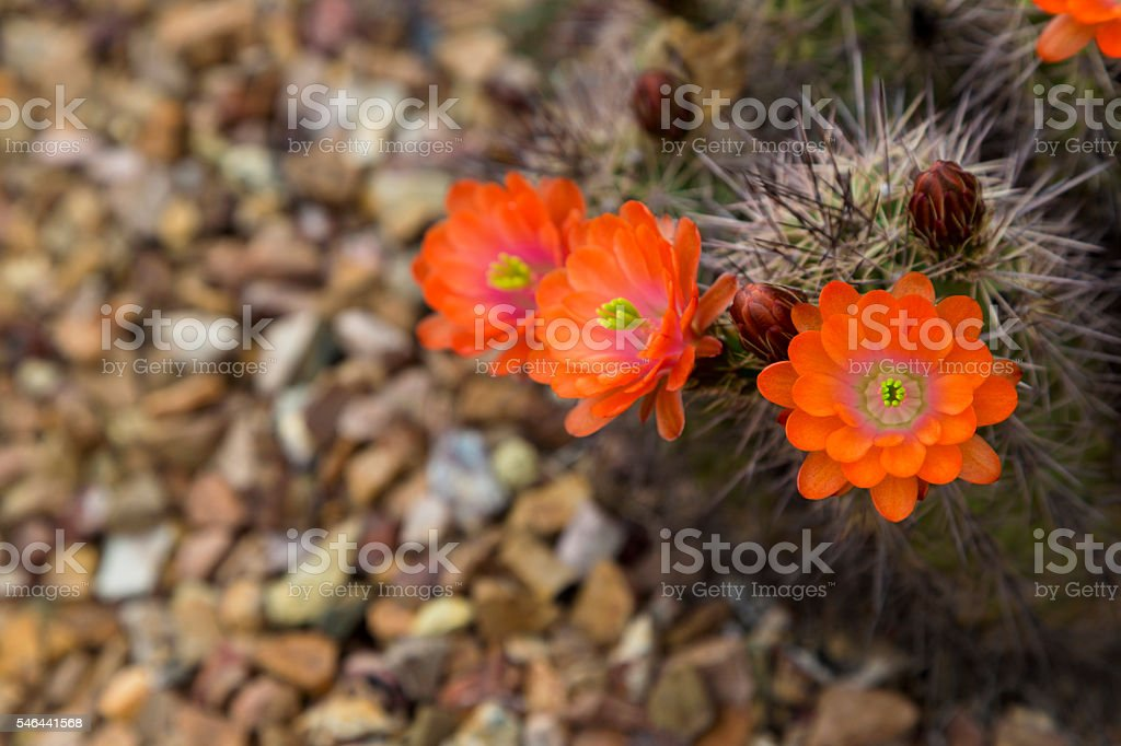 Hedgehog flower in selective focus stock photo