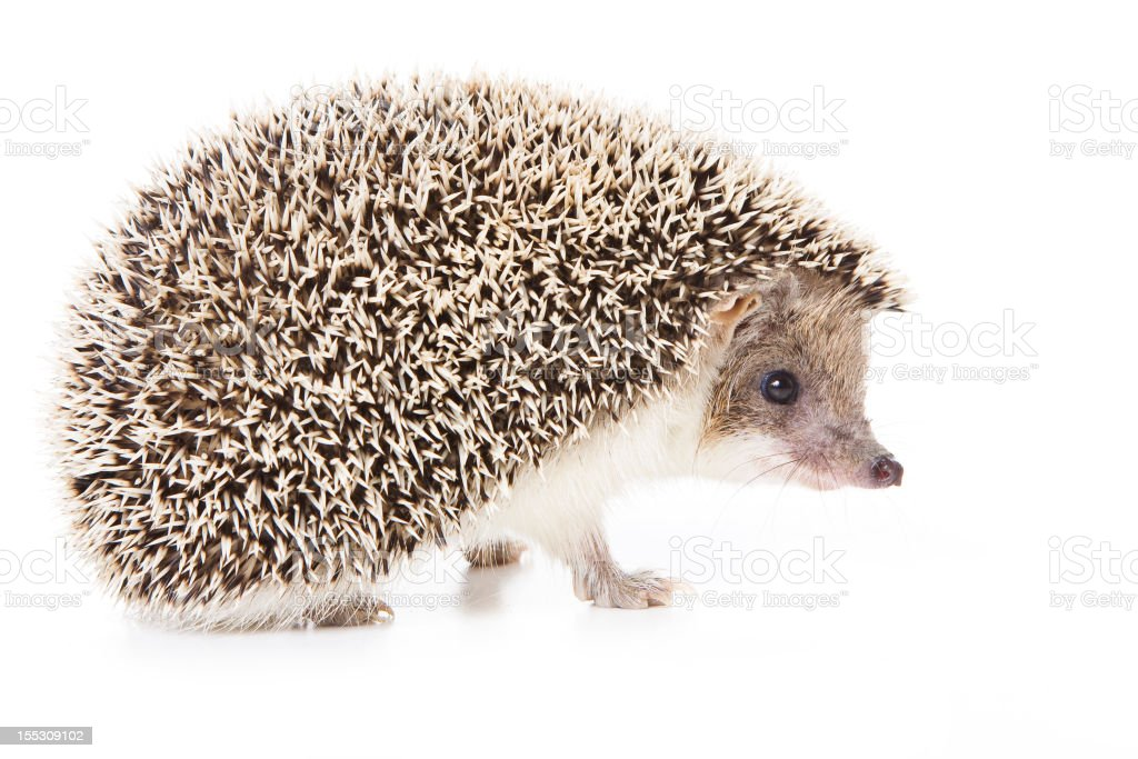 Hedgehog repeating photograph on pink and cream background stock photo