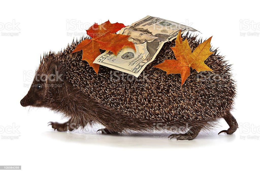 Hedgehog with dollars profit stock photo