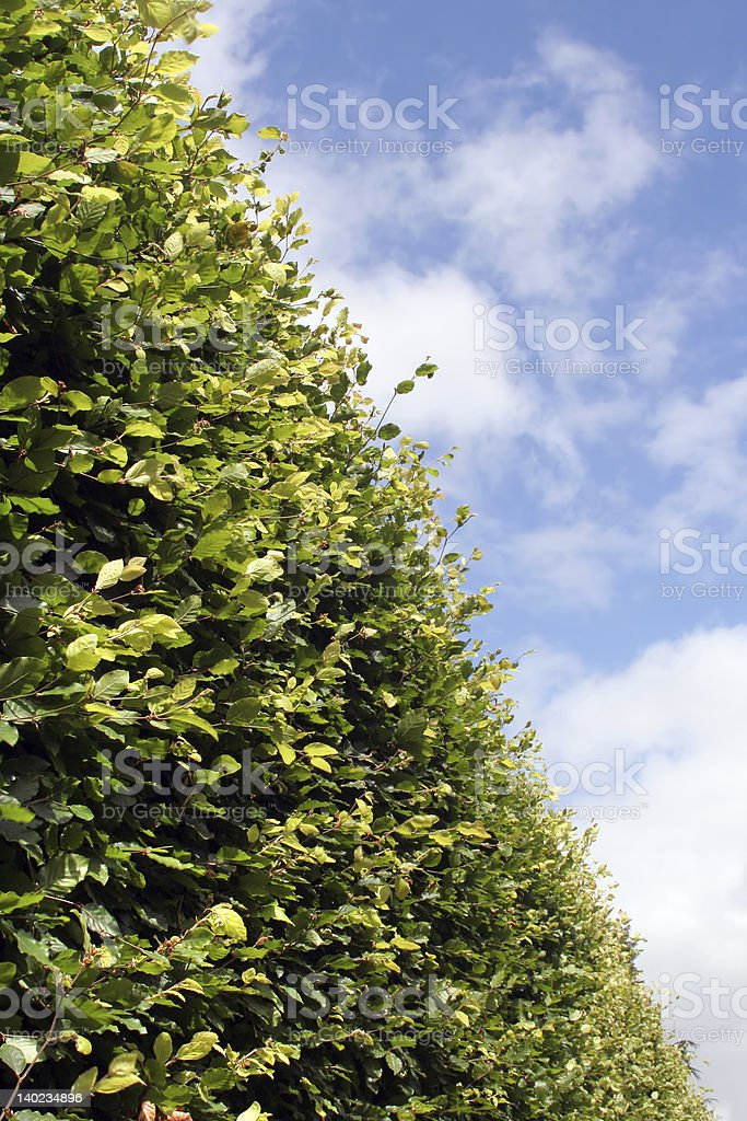 Hedgerow stock photo