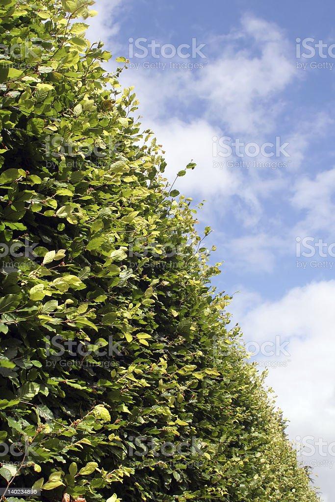Hedgerow stock photo