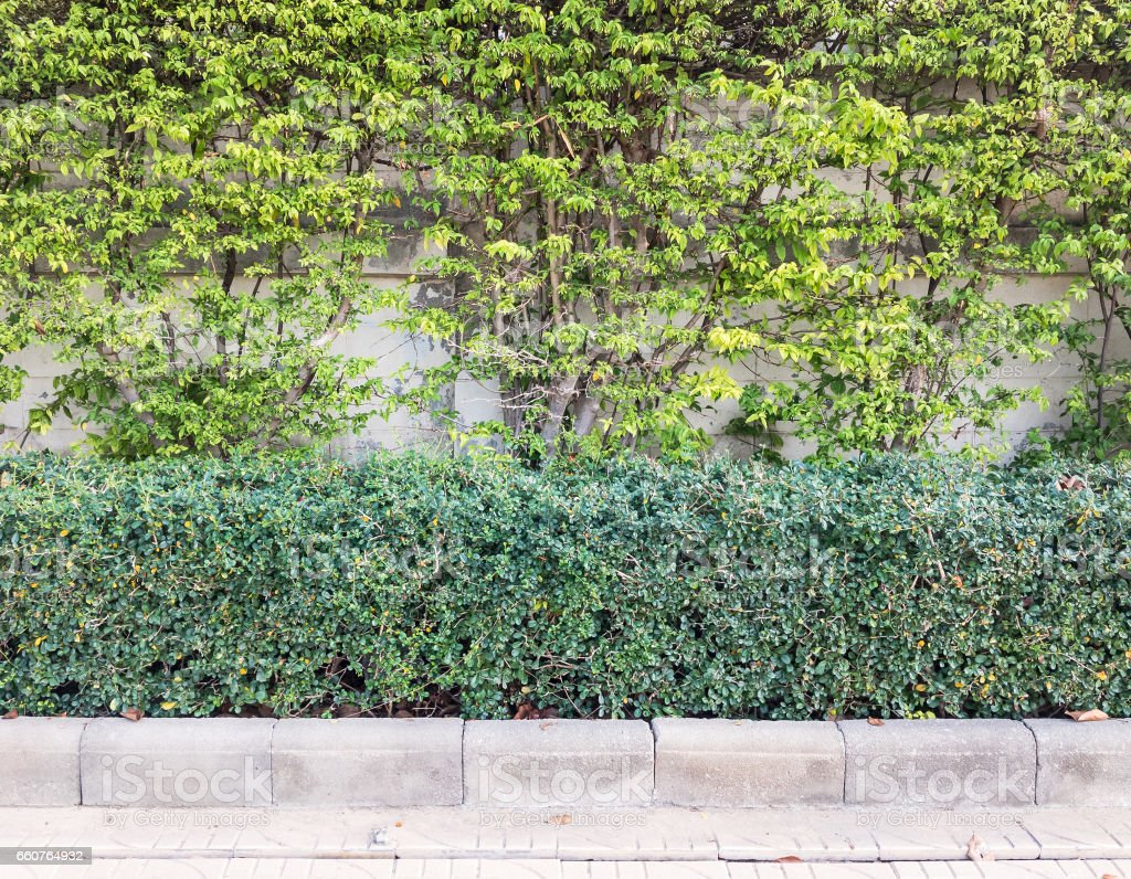 Hedgerow with the small bush. stock photo