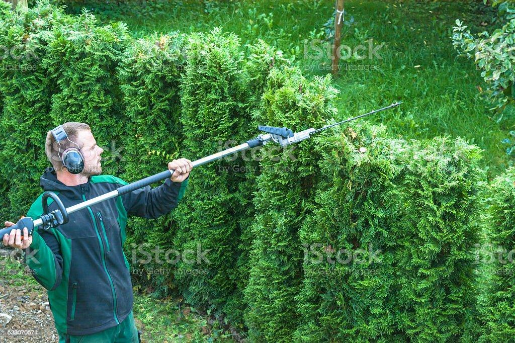 Hedges cutting stock photo
