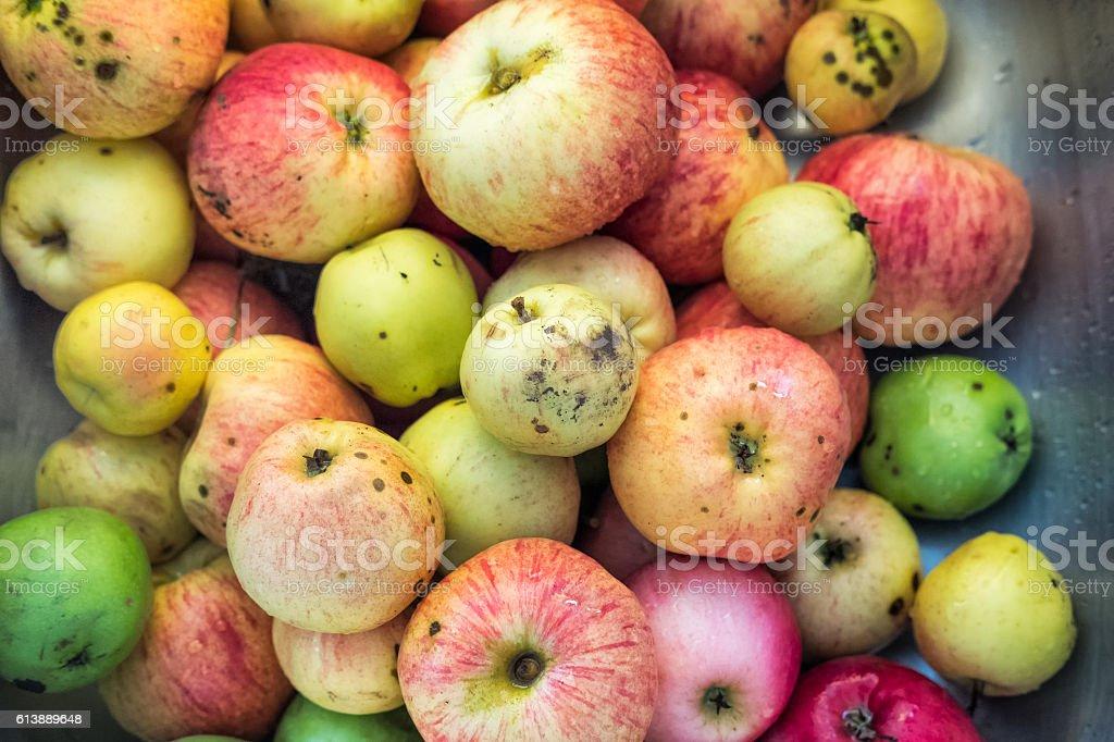 Heirloom, Heritage Homegrown Organic Apple Harvest, Granny Smith, McIntosh Varieties stock photo