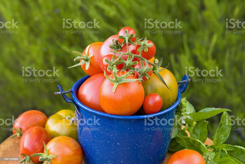 Heirloom Tomatoes, Vegetable Garden Harvest stock photo