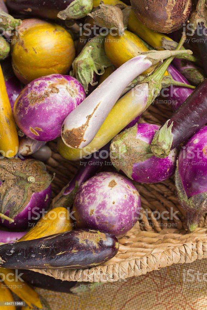 Heirloom Variety Eggplant stock photo