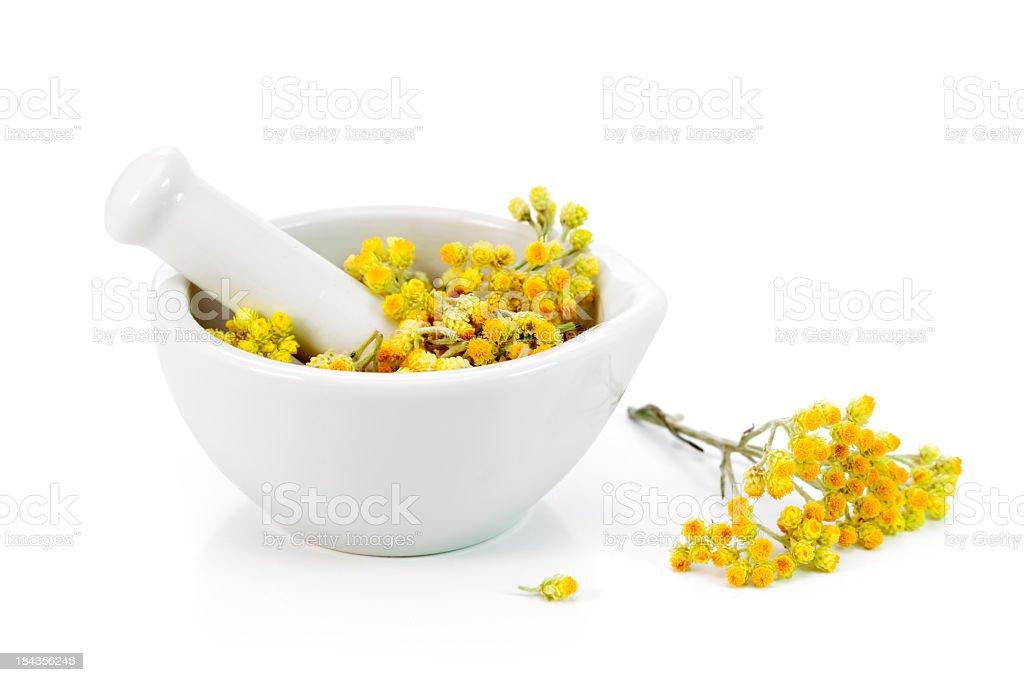 Helichrysum arenarium royalty-free stock photo