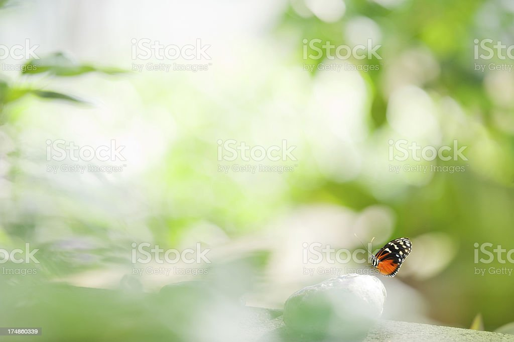 Heliconius butterfly royalty-free stock photo