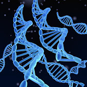 DNA Helixes