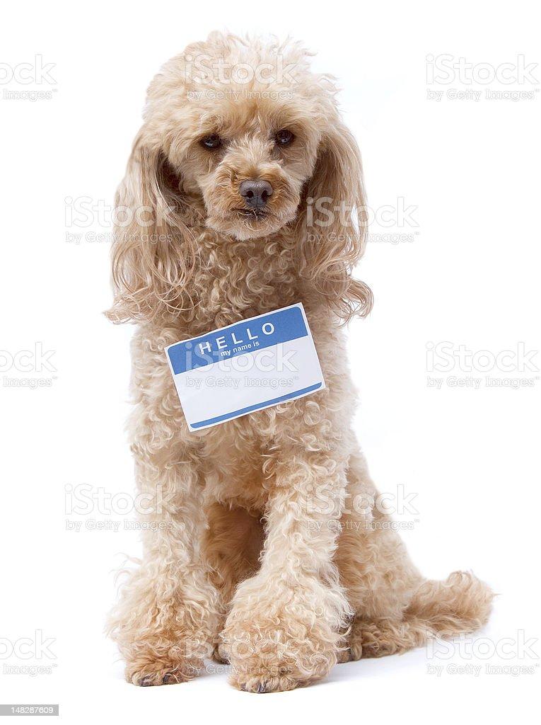 Hello Doggie stock photo