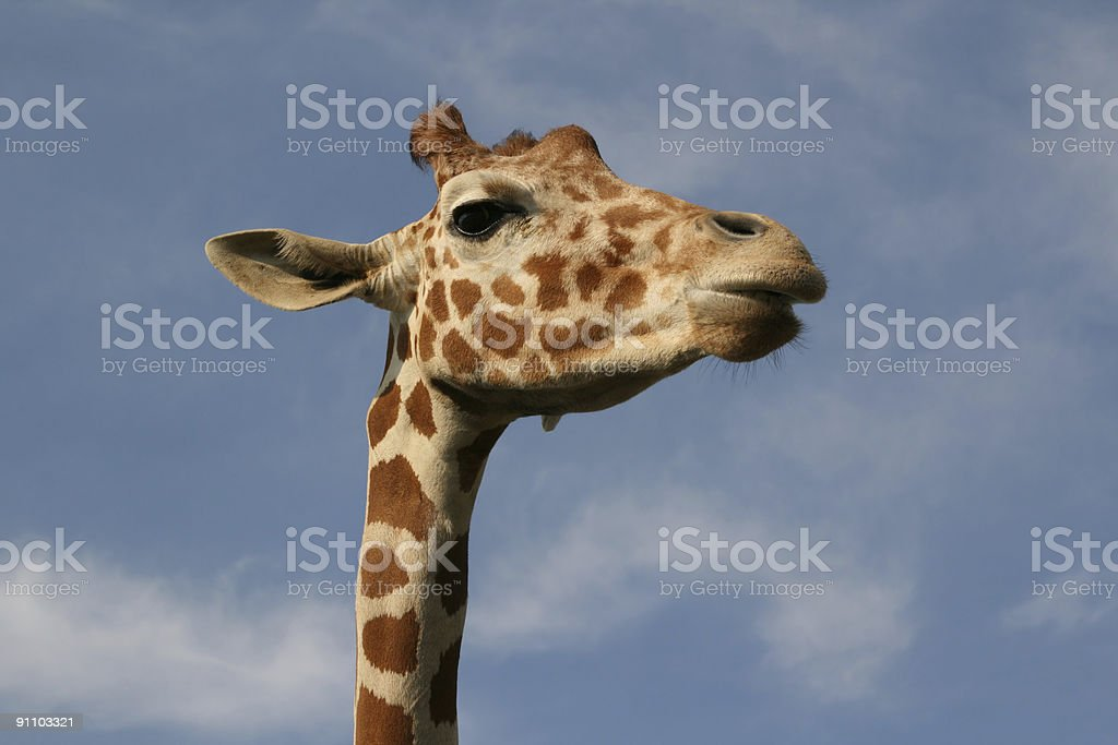 Hello, Down There royalty-free stock photo