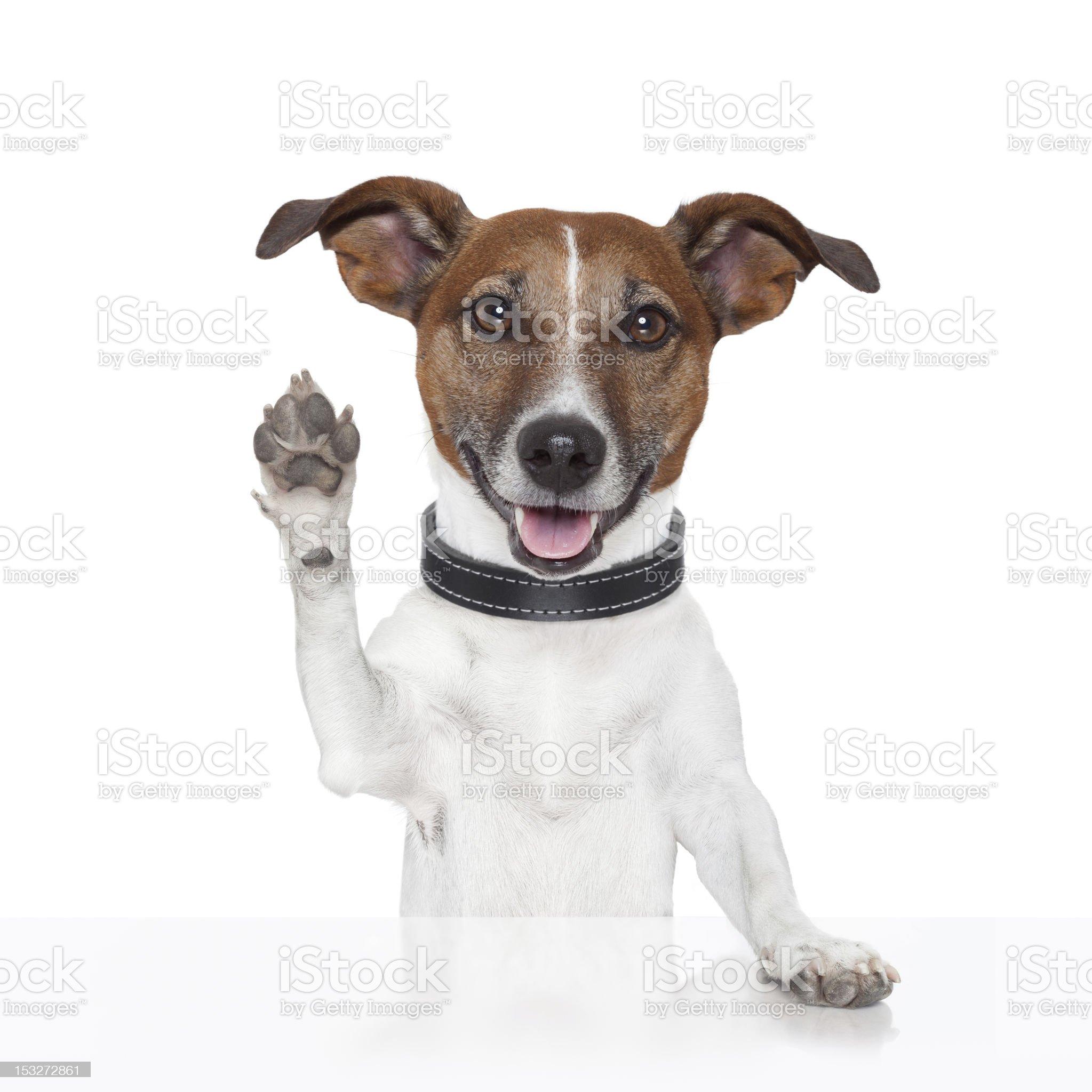 hello goodbye high five dog royalty-free stock photo