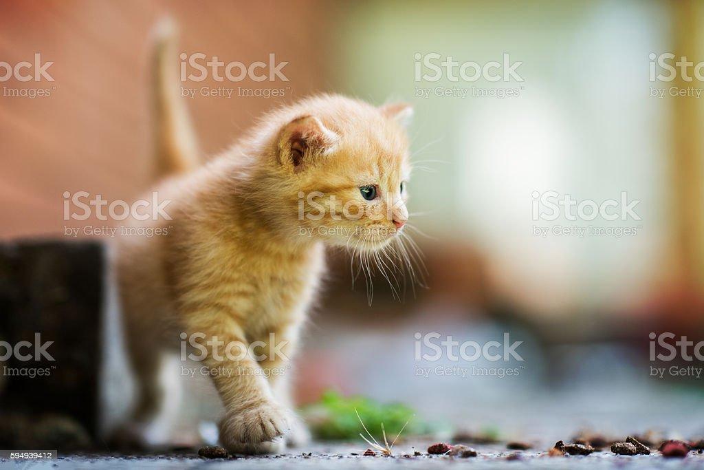 Hello, I`m Kitty stock photo