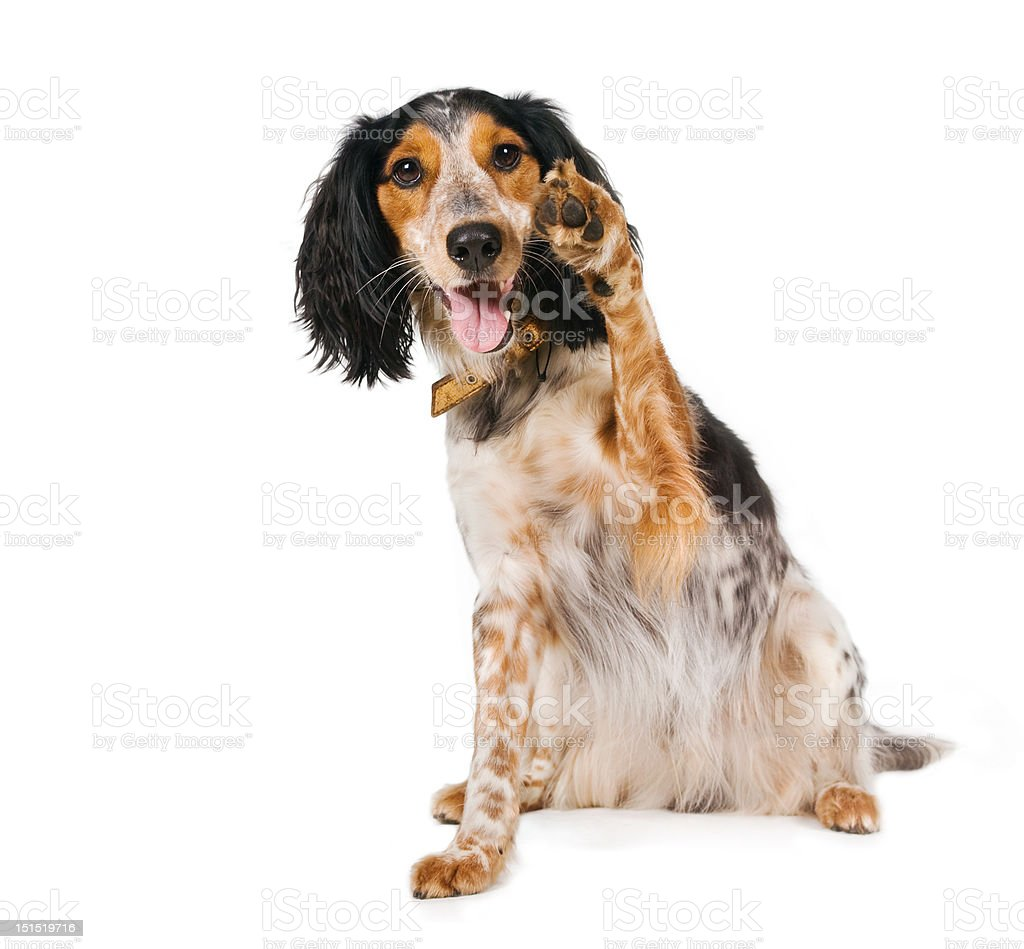Hello there! Waving dog        (A Lobke Peers) stock photo