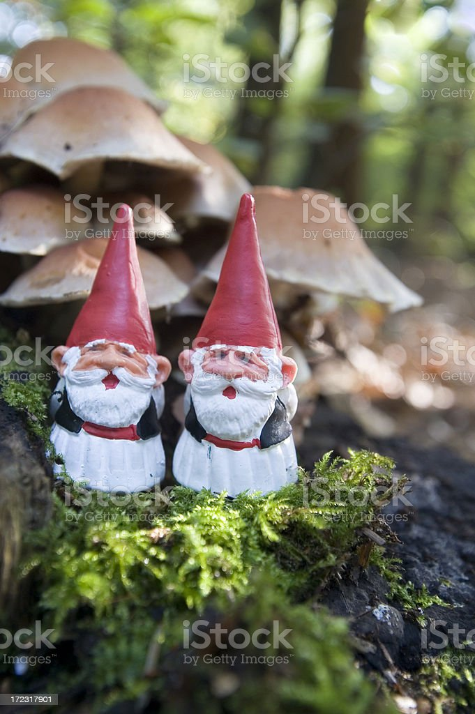 Hello, welcome to our forrest stock photo
