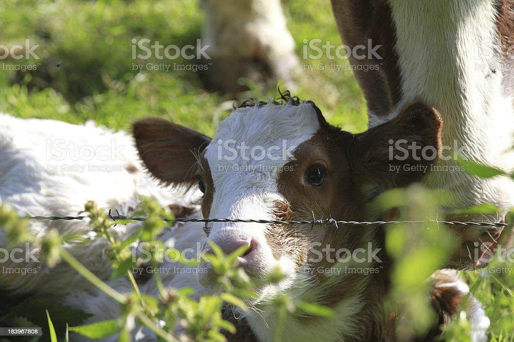 Hello world foto de stock libre de derechos