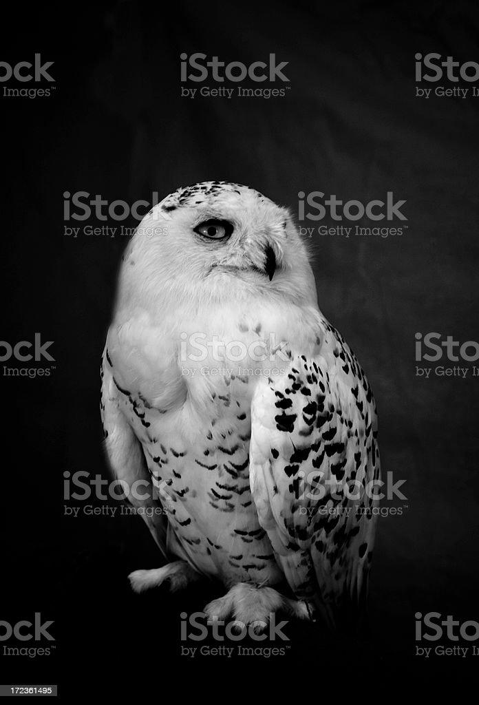 helloo owl stock photo