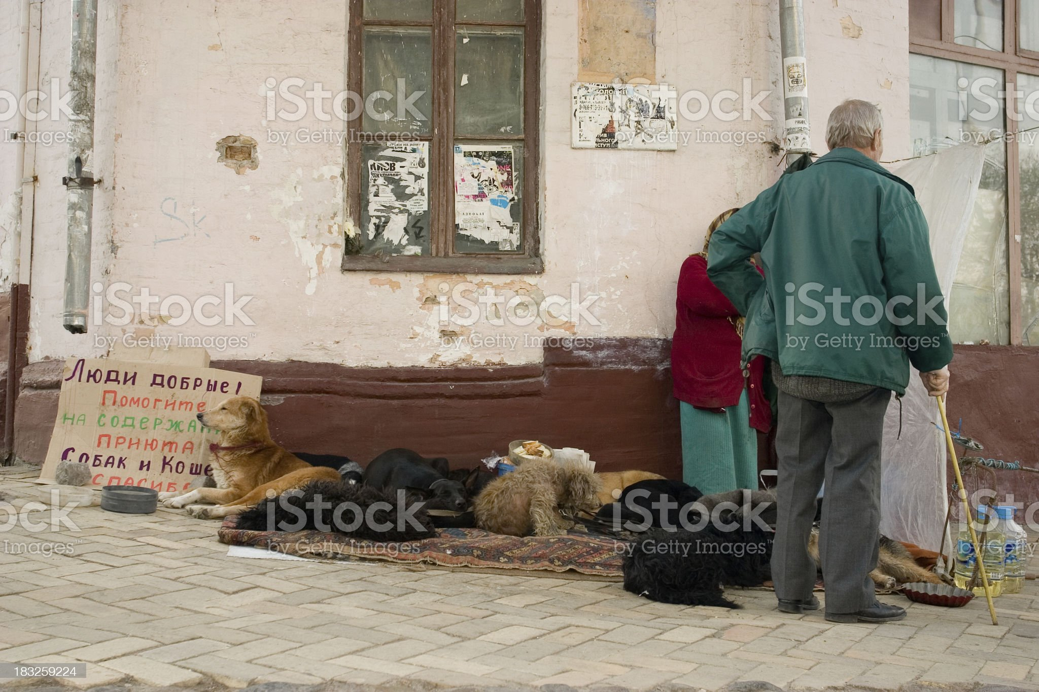 Help take care of this orphanage for Dogs and Cats royalty-free stock photo