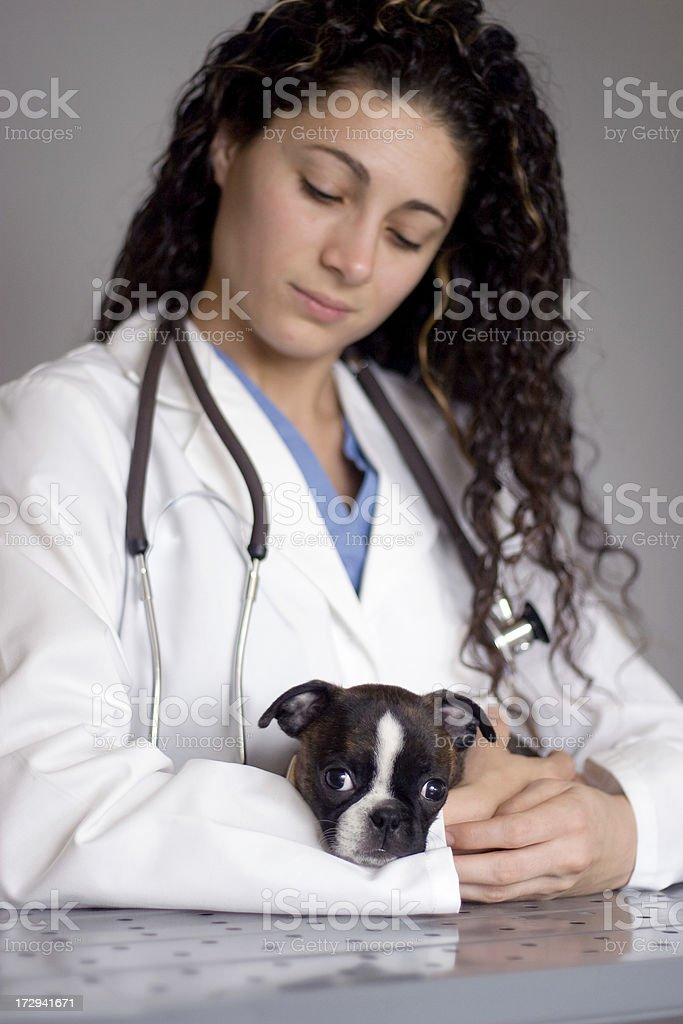 Helping Puppy Get Better royalty-free stock photo