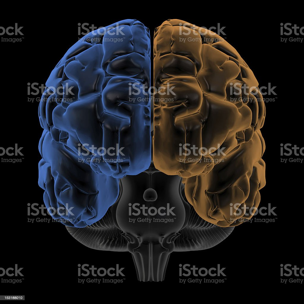 Hemispheres of the brain front view royalty-free stock photo