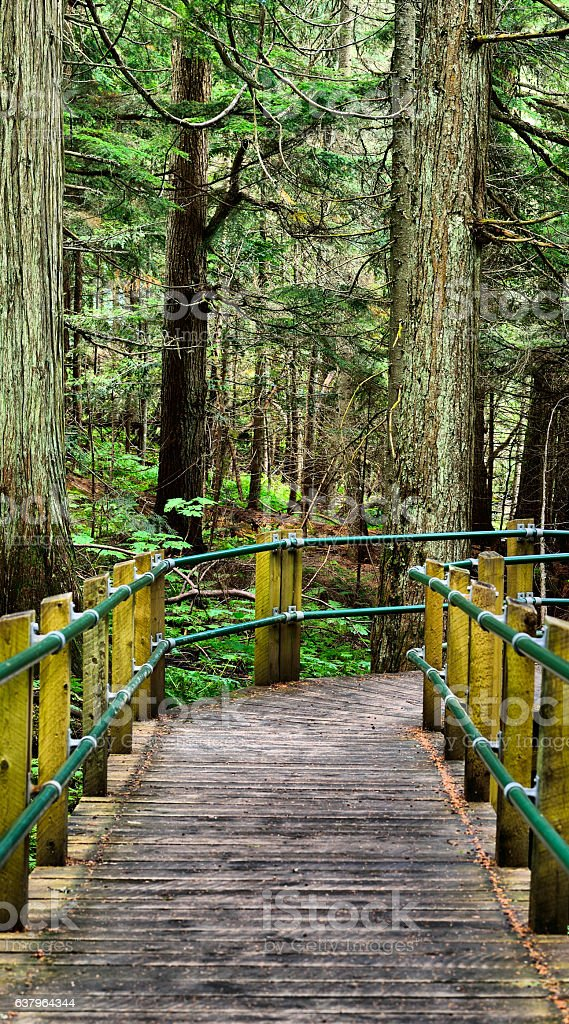 Hemlock Grove Boardwalk stock photo