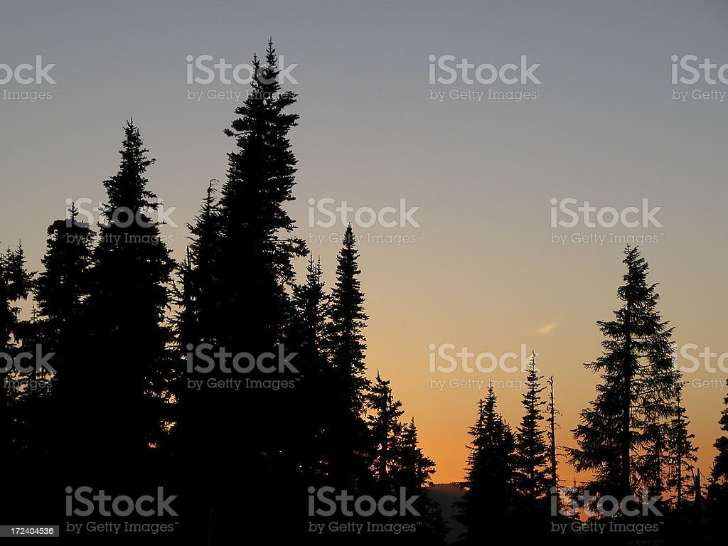 Hemlock Treetop Silhouette at Sunset royalty-free stock photo