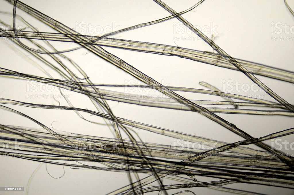 hemp fibers micrograph royalty-free stock photo