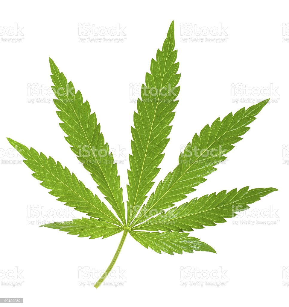 A hemp leaf image on a white background royalty-free stock photo