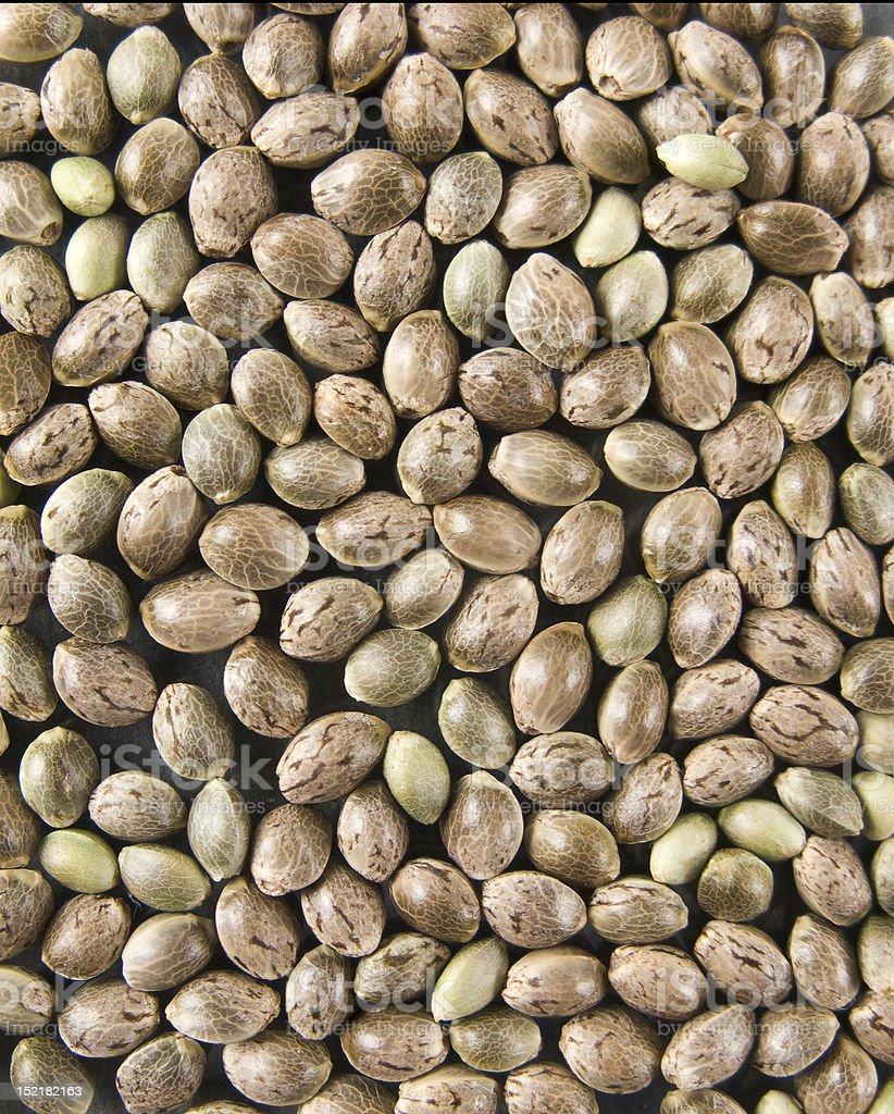 Hemp seed stock photo