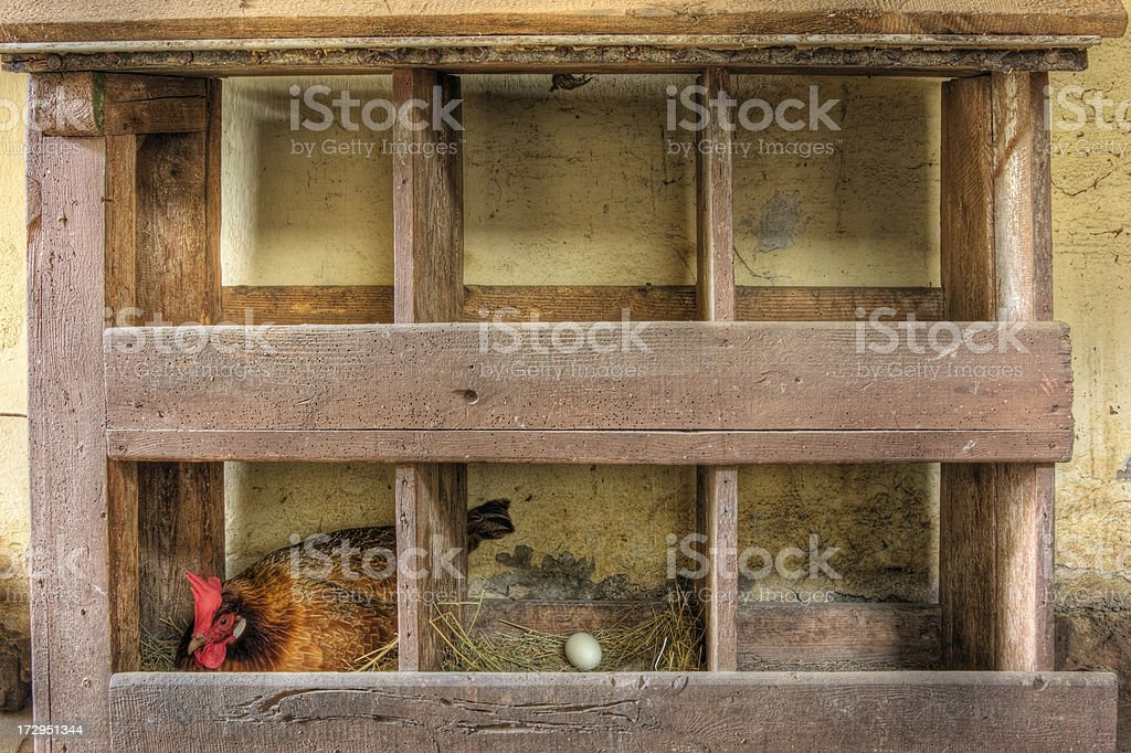 Hen house stock photo