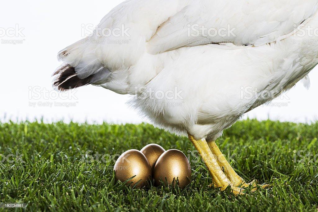 Hen laying golden eggs stock photo