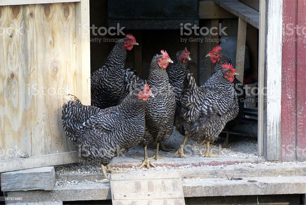 Hen Party stock photo