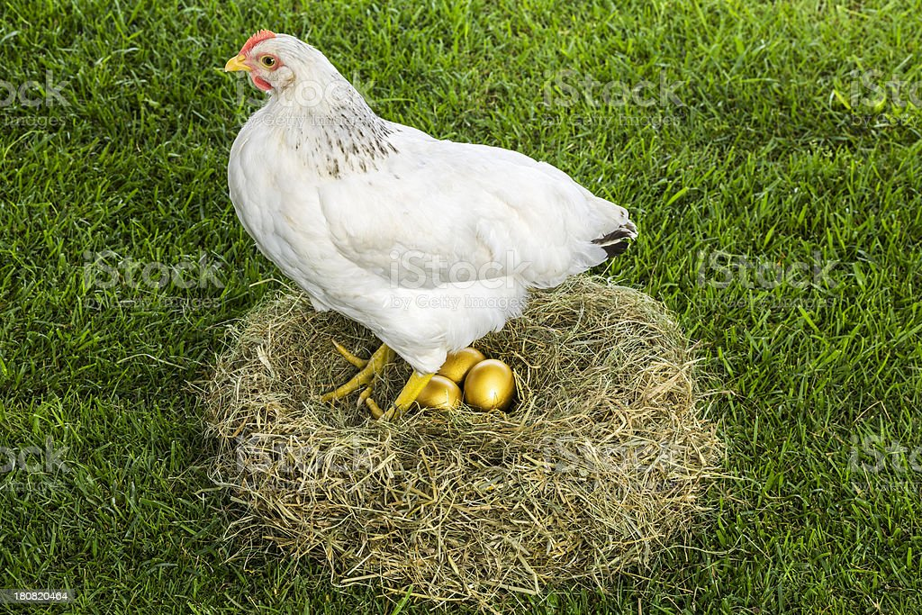 Hen that lays golden eggs stock photo