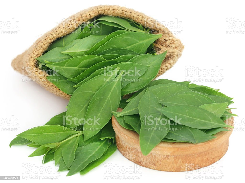 Henna leaves in sack and a wooden bowl stock photo