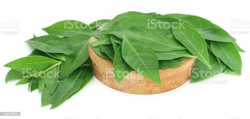 Henna leaves stock photo