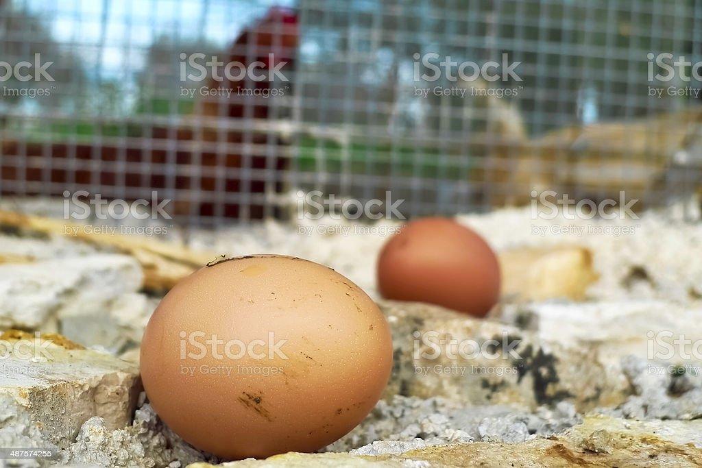 Hens eggs stock photo