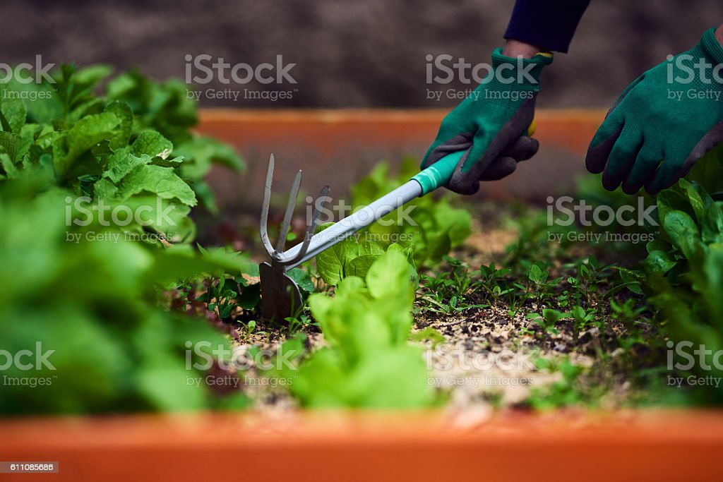 her way to relax is gardening stock photo