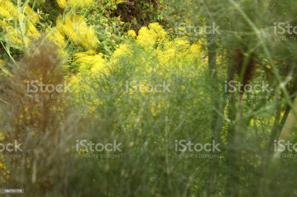 Herb abstract stock photo