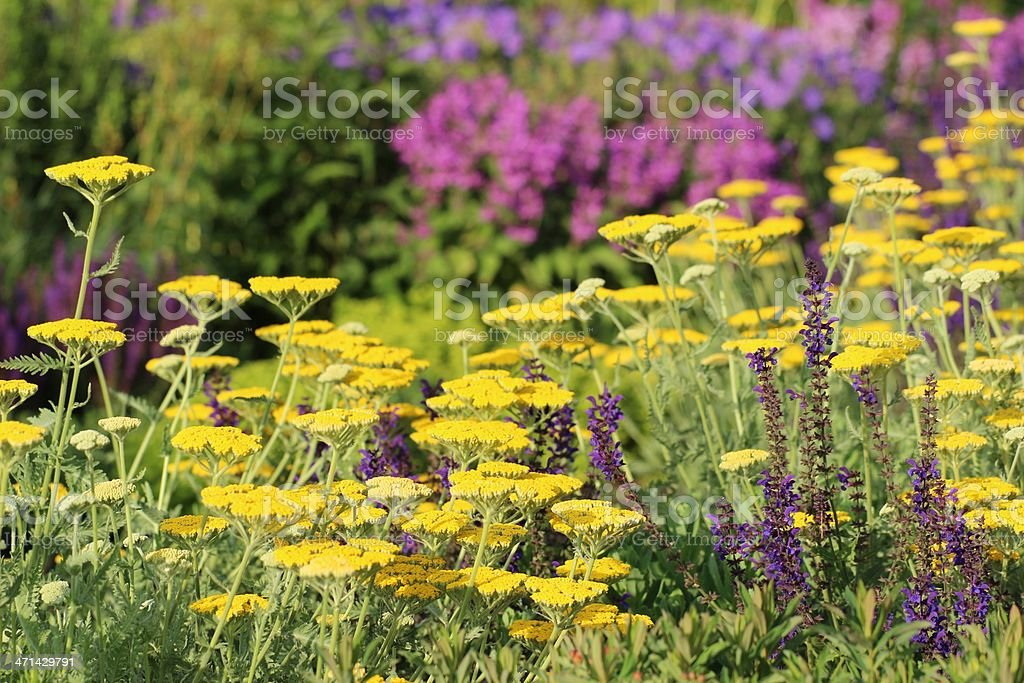 Herb and flower garden stock photo