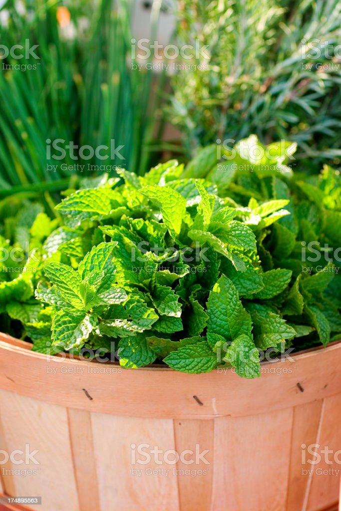Herb Basket royalty-free stock photo