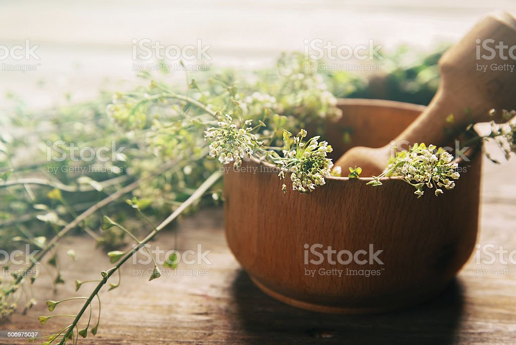 Herb capsella in mortar stock photo